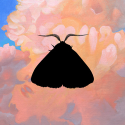 Cover image for Moth to the Flame (Olga Bell Remix)